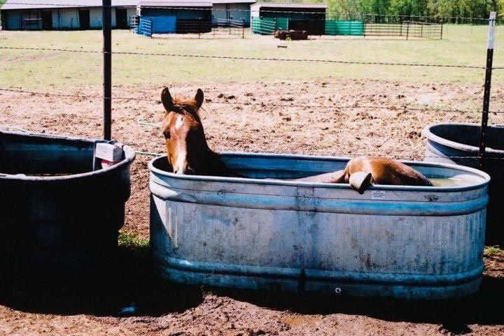 Ways for horse and rider to keep cool at summer shows