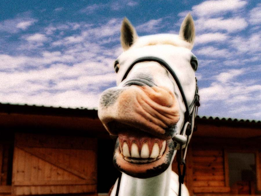 Equine Dentists