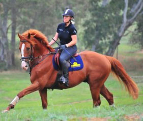 Kirby Park Irish Force - 4 Year Old Eventing Stallion