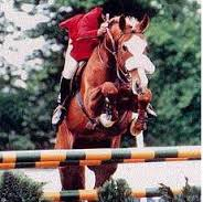 Show Jumping Stallion