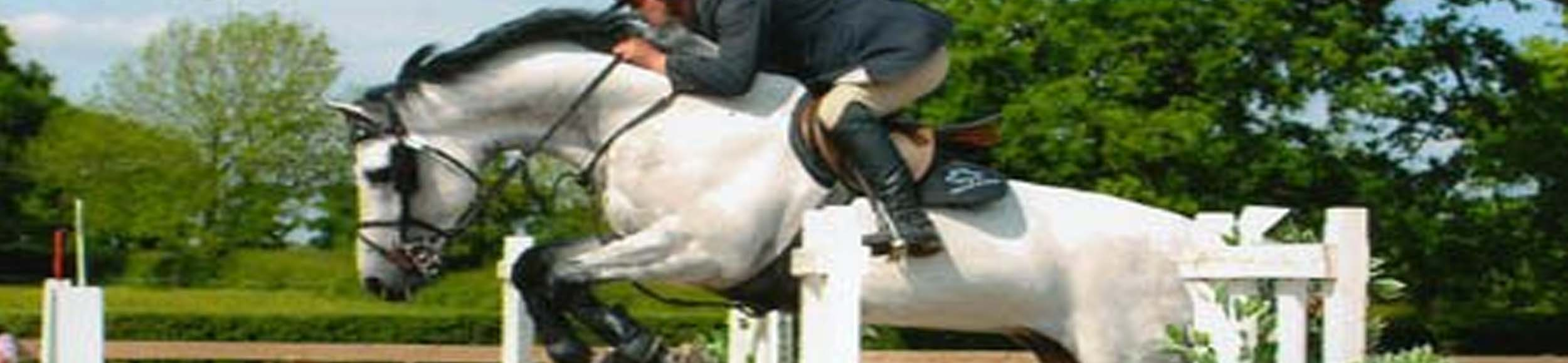Sport Horses For Sale - West Sussex