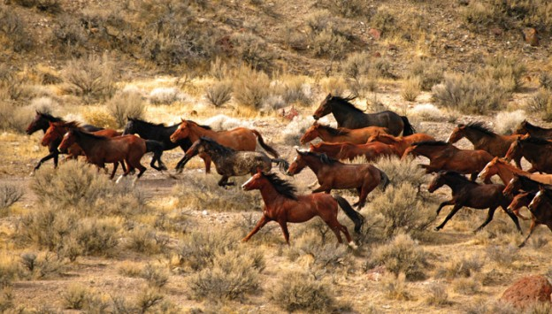 What is the Difference Between Wild and Feral Horses?