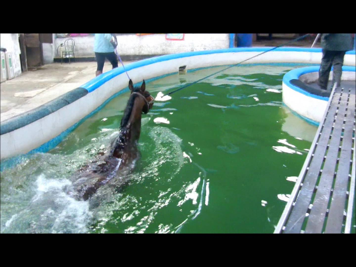 Rehabilitation of the Injured Horse