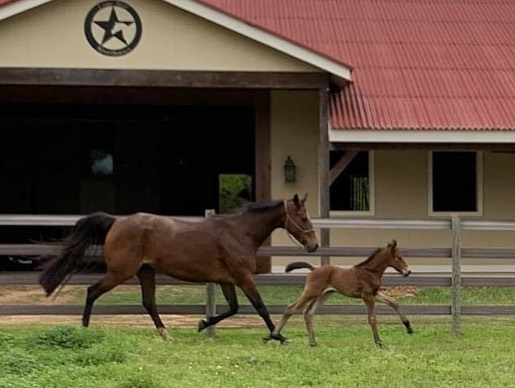 2021 Colt Foal - Diamante Fino x For Pleasure