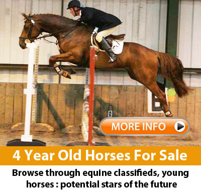 4 Year Old Horses For Sale