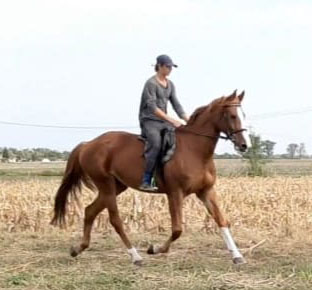 6 Year Old Mare Jumping 1.25cm (L-egant x Carthag Z) - For Sale