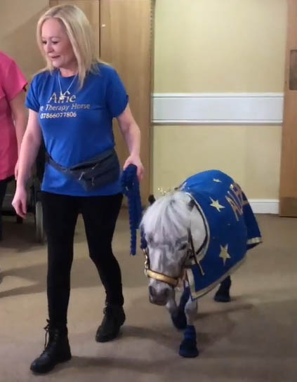 Alfie The Therapy Horse