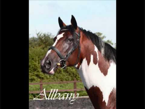 Pferde Stud - Allbany