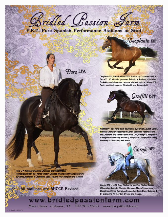 Andalusian Stallions
