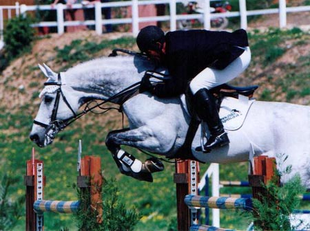 Arturo 8 - Showjumping Stallion