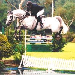 High Offley Stud - Breeders Of Proven Sport Horses