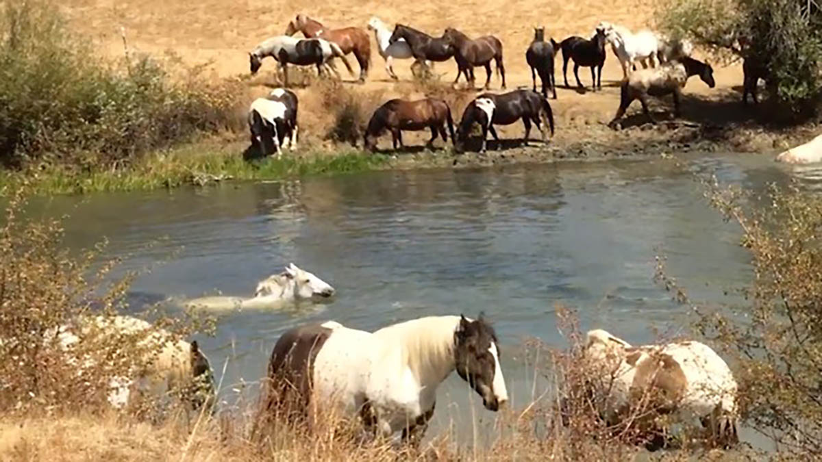 At Dutches Sanctuary Horses Are Having A Pool Party