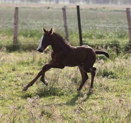 Athletic Colt Foal By Million Dollar