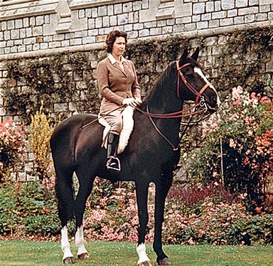Horses Of Queen Elizabeth II