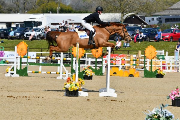 Billy Bakewell (Billy Umbongo x Jazz) - 5 Year Old