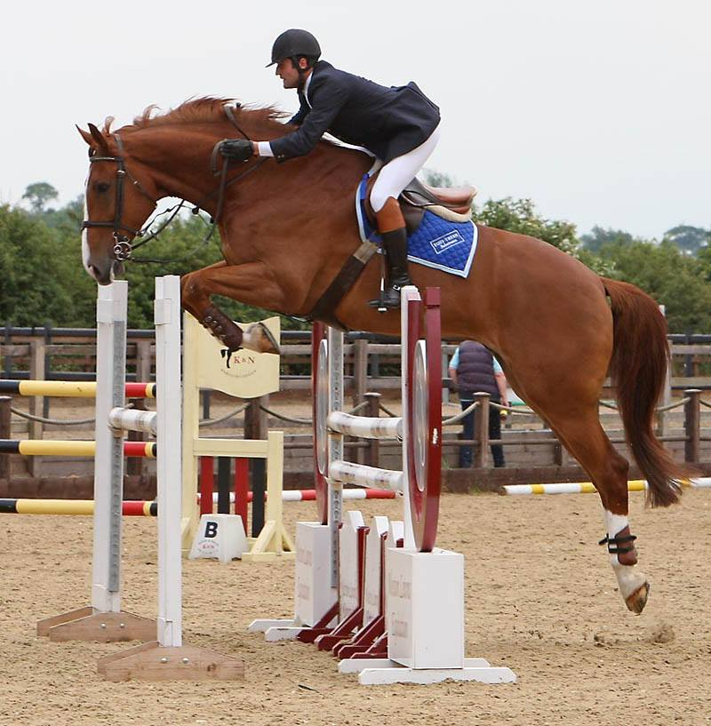 British Showjumping Horse Search