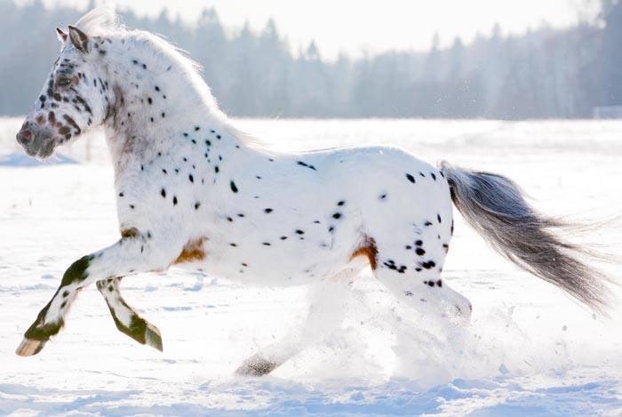 Brown and White Spotted Horse