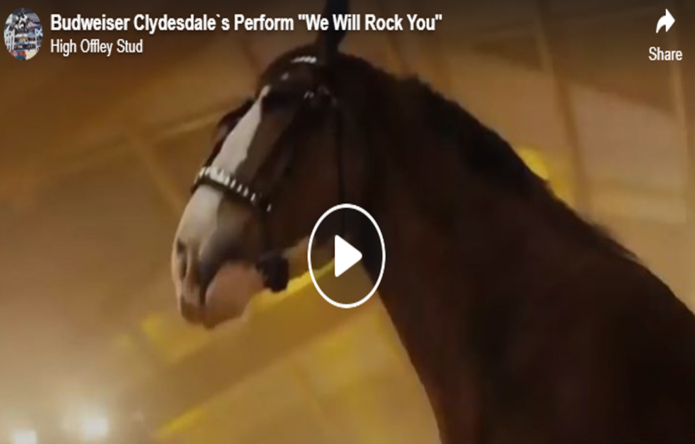 Budweiser Clydesdales Perform - We Will Rock You