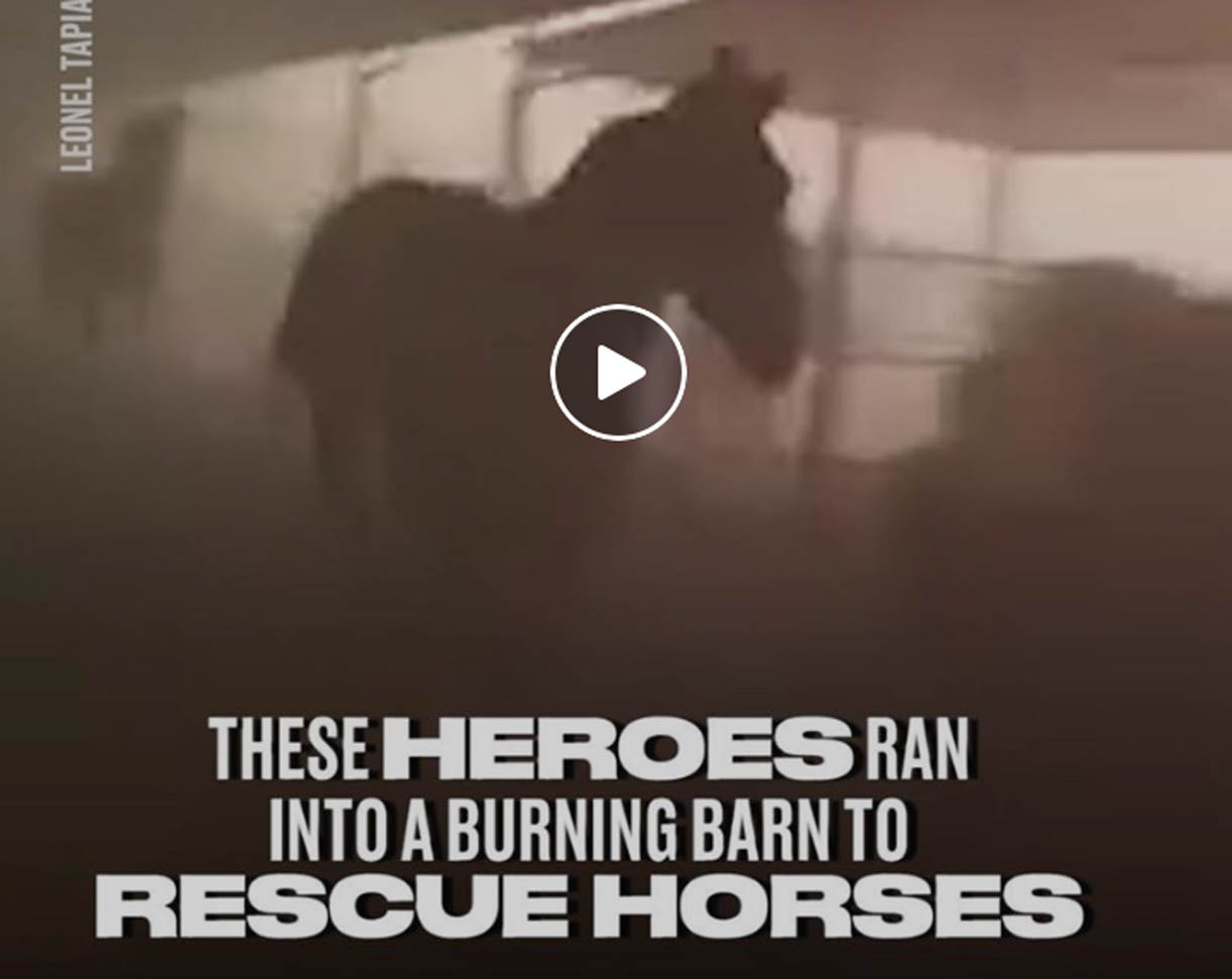 Heroes Run Into Burning Barn To Rescue Horses