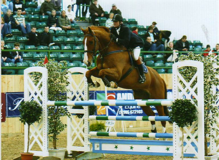 Buy Show Jumping Horses