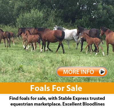 Foals Horses For Sale