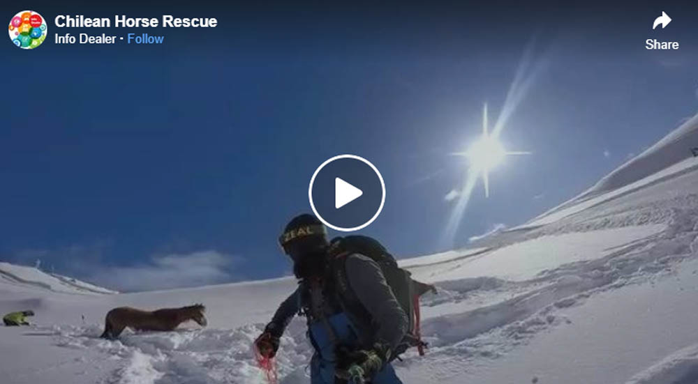 Chilean snowboarder rescues horse that got stuck in the snow