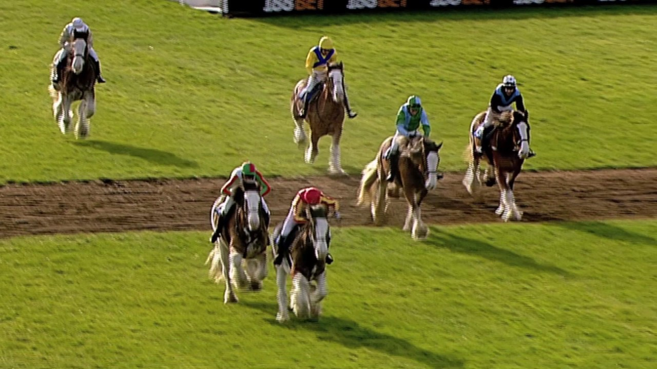 Annual Clydesdale Stakes - Exeter Racecourse