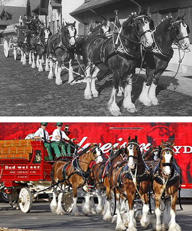 Clydes Dales Horses.jpg