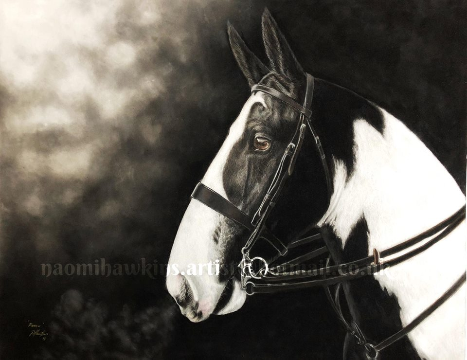 Coloured Horse Pastel Drawing