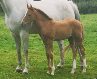 Colt Foals For Sale
