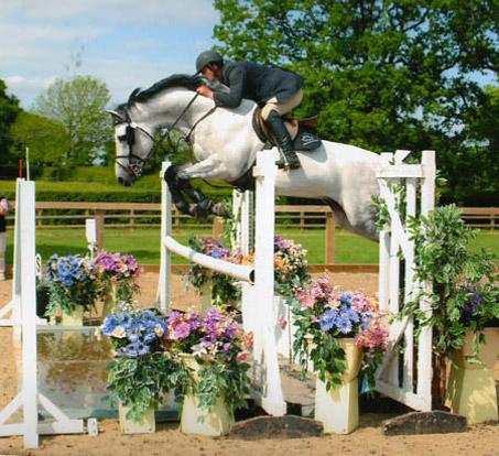 Showjumping Stallions