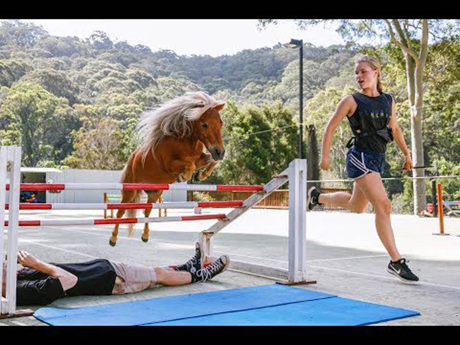Crunch | The Miniature Horse With A Big Jump
