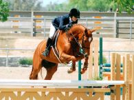 California Sport Horses - Buying and Selling Horses