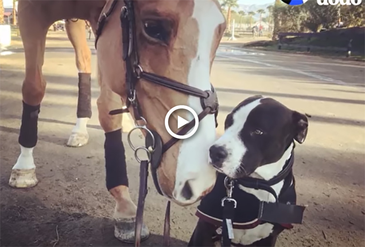 Doug The Dog Actually Thinks He Is A Horse