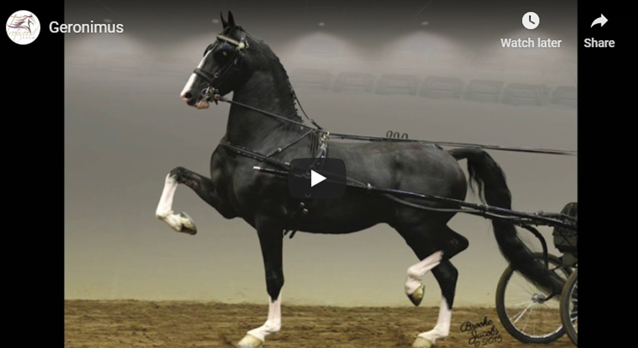 Dutch Harness Horse