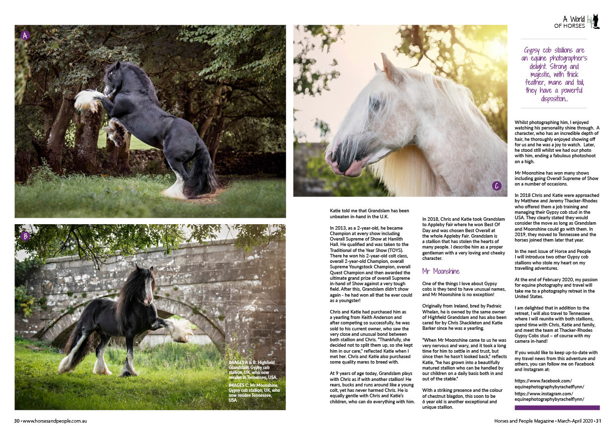 Equine Photography by Rachel Flynn