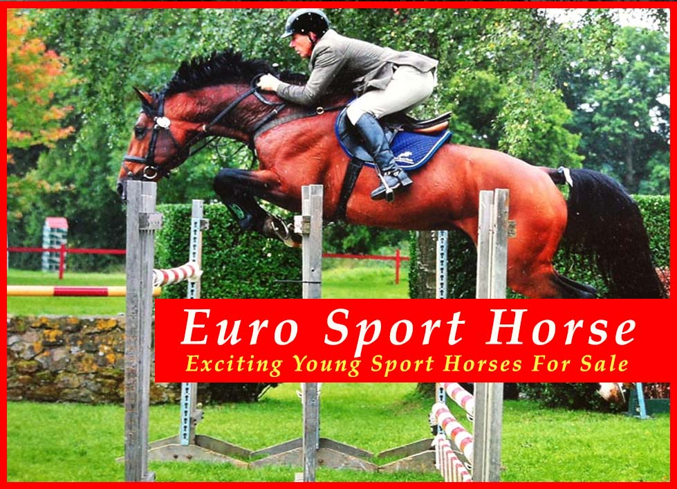 Euro Sport Horses For Sale