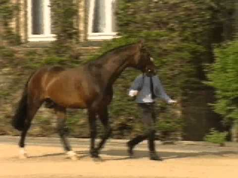Florestan I Dressage Stallion