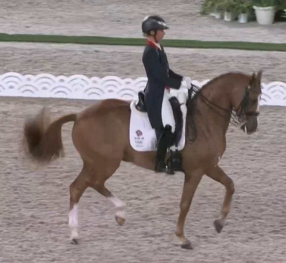 Gio - Dressage Horse