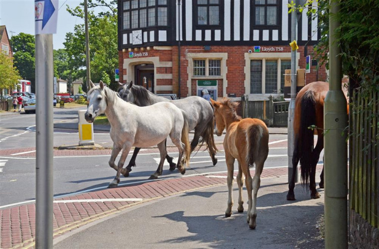 Hampshire - The English Forest Where Horses Roam Free