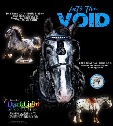 Heavy Draft Horse - Into The Void (Appaloosa)