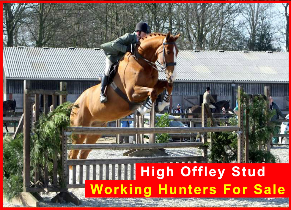 High Offley Stud - Working Hunters For Sale
