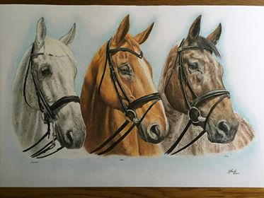 Horse Coloured Pencil Drawing