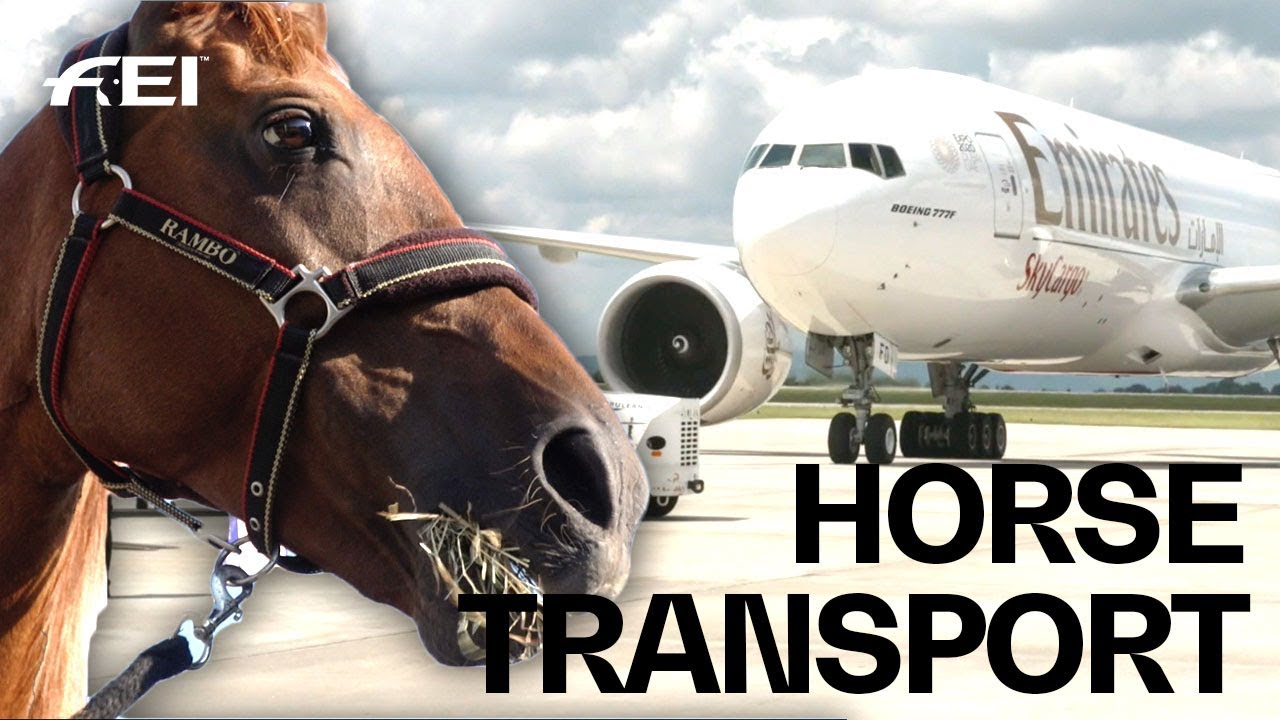 Horse Airplanes