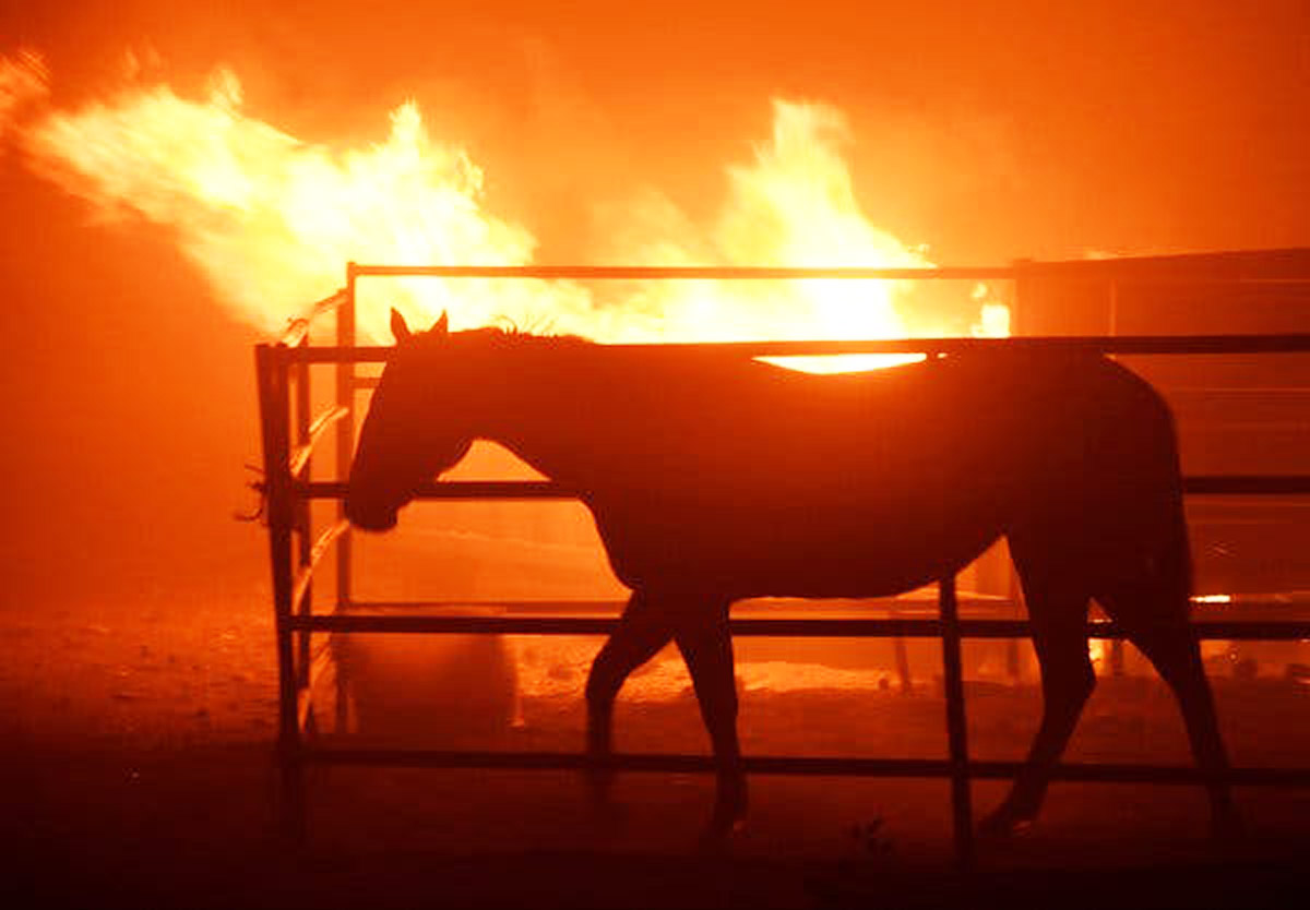 West Coast Fires - Horse Rescue Update