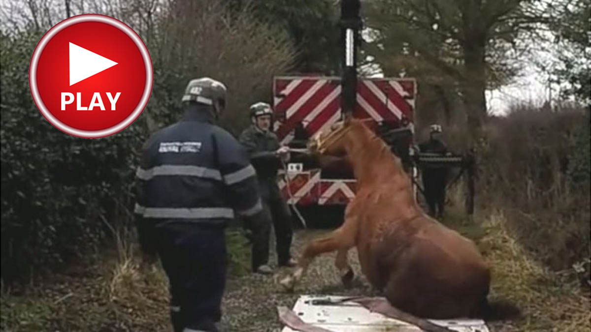 Horse Rescue by Shropshire Firefighters