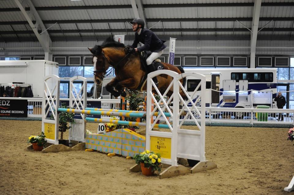 How Much Do Jumping Horses Cost