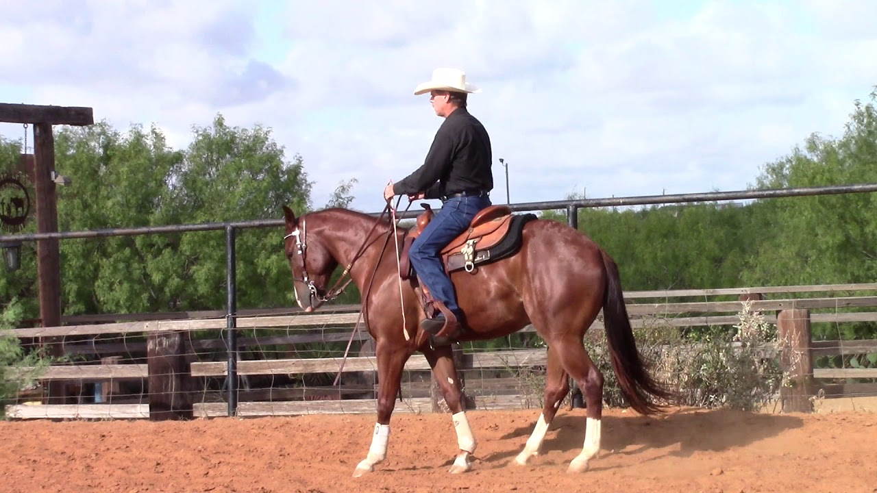How To Train A Horse To Do A Rollback?