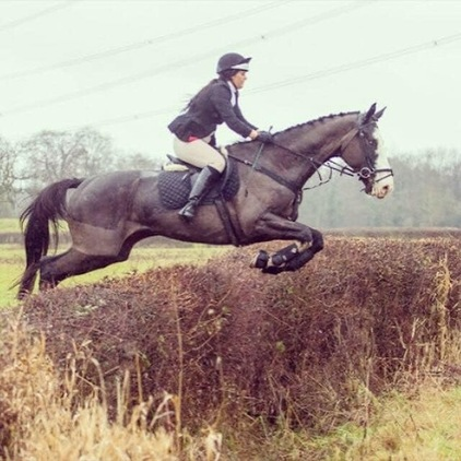 18.2hh Bargain Gelding - Ideal Hunter
