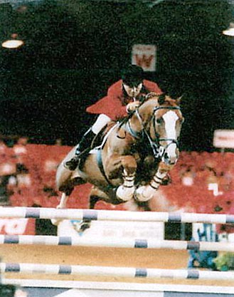 Its The Business- Showjumping Stallion